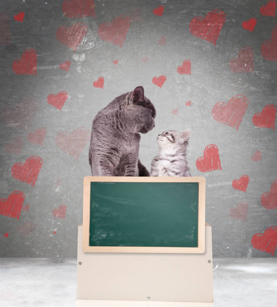 in love couple of cats  showing blank chalkboard in love couple of cats look at each other while showing blank chalkboard on grey background with heart symbols kitten cute valentines day domestic cat stock pictures, royalty-free photos & images