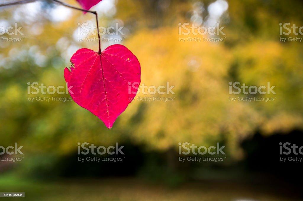 In der Liebe mit dem Herbst in England – Foto