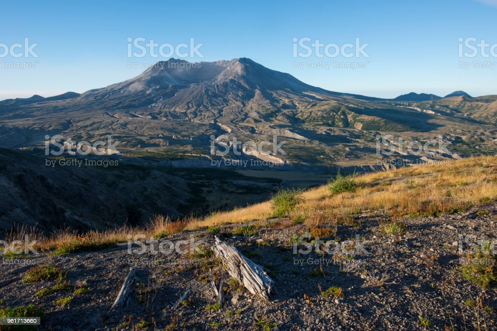 In the blast zone of Mount St Helens, USA stock photo