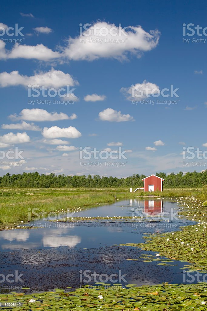 In The Bog royalty-free stock photo