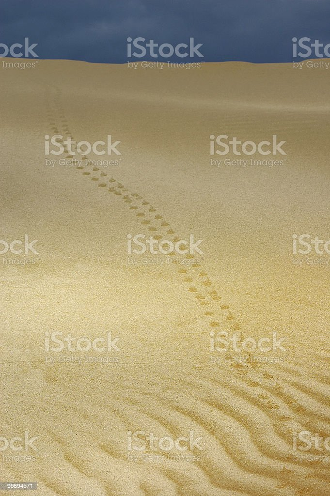 In the desert. royalty-free stock photo