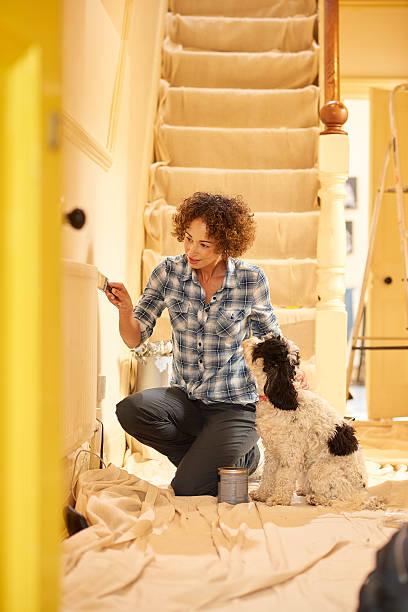 in the dog house - hundezubehör diy stock-fotos und bilder