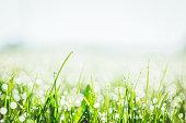 gouttes d'eau sur la pelouse le matin au levé du soleil
