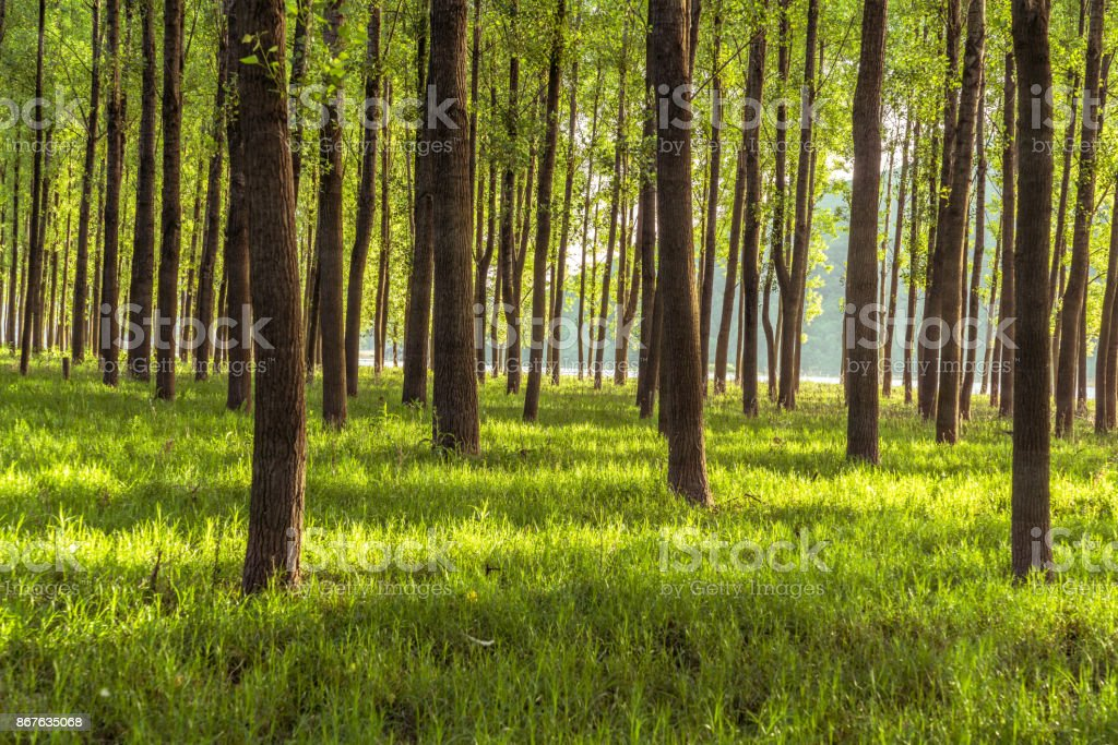 In the early morning of the woods stock photo