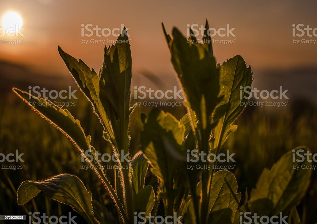 In the evening dress foto de stock royalty-free