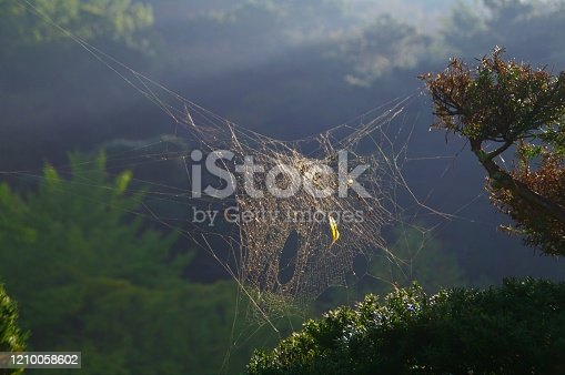 656192770 istock photo In the fall, the playground of spiders that have plump up 1210058602
