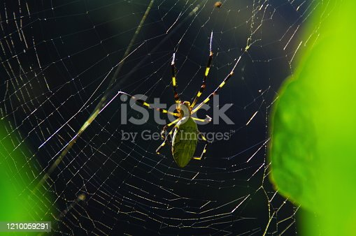 656192770 istock photo In the fall, the playground of spiders that have plump up 1210059291