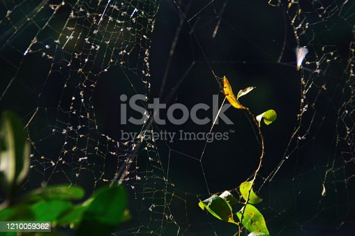 656192770 istock photo In the fall, the playground of spiders that have plump up 1210059362