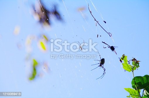 656192770 istock photo In the fall, the playground of spiders that have plump up 1210059413