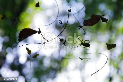 656192770 istock photo In the fall, the playground of spiders that have plump up 1210059676
