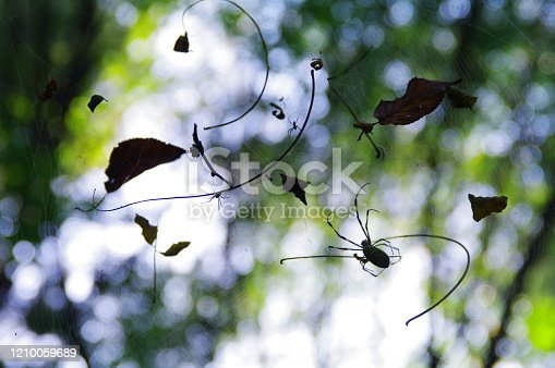 656192770 istock photo In the fall, the playground of spiders that have plump up 1210059689