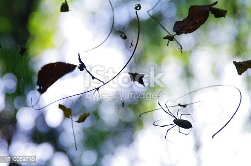 656192770 istock photo In the fall, the playground of spiders that have plump up 1210059710
