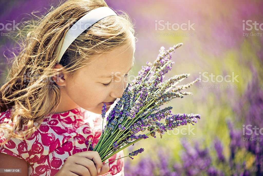 In the field of lavender stock photo