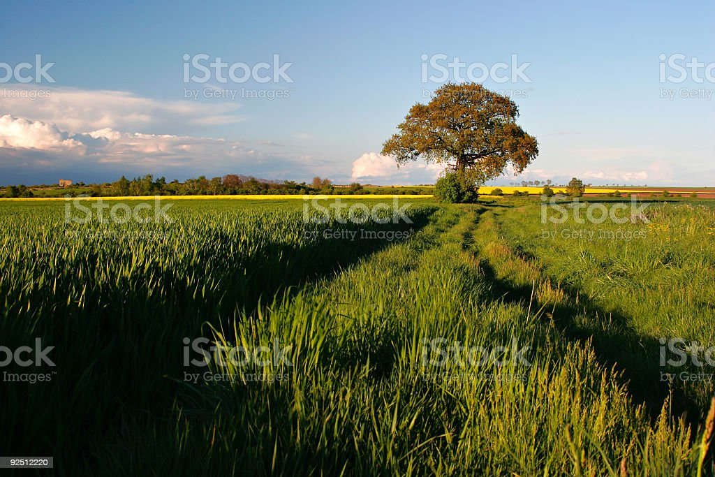In the Fields royalty-free stock photo