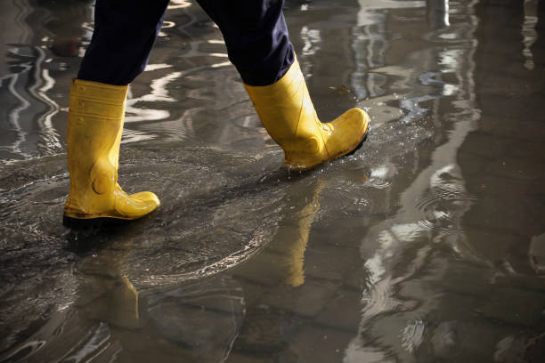 In The Flood Water stock photo
