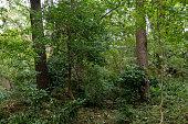 Long walking path among pine trees in Ataturk Arboretum Park in Turkey