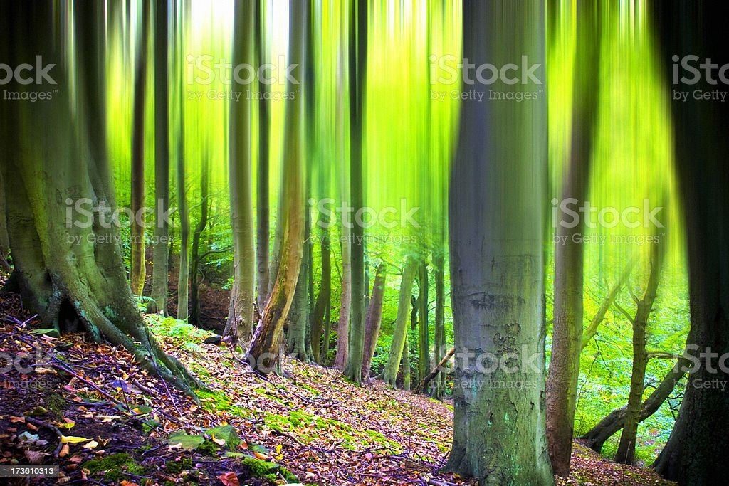 In the forest royalty-free stock photo