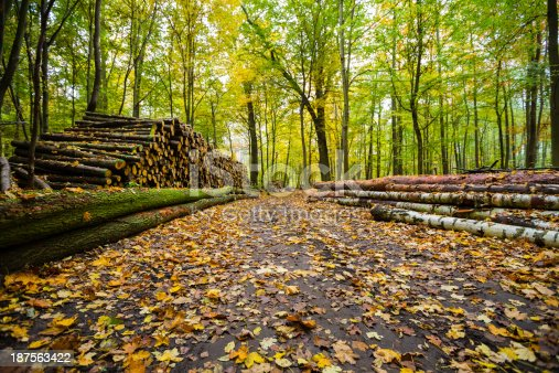 istock in the forest 187563422