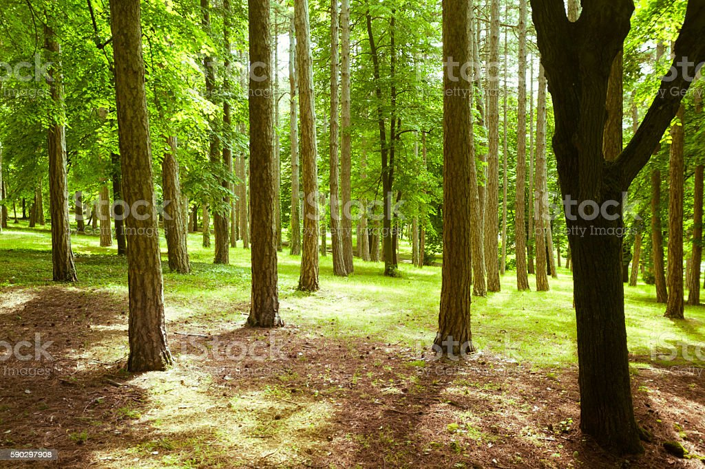 В лесу  Стоковые фото Стоковая фотография