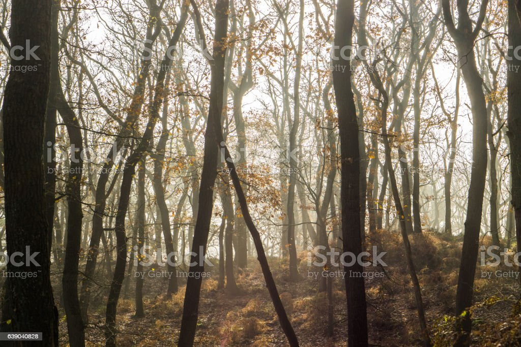 Im Wald stock photo
