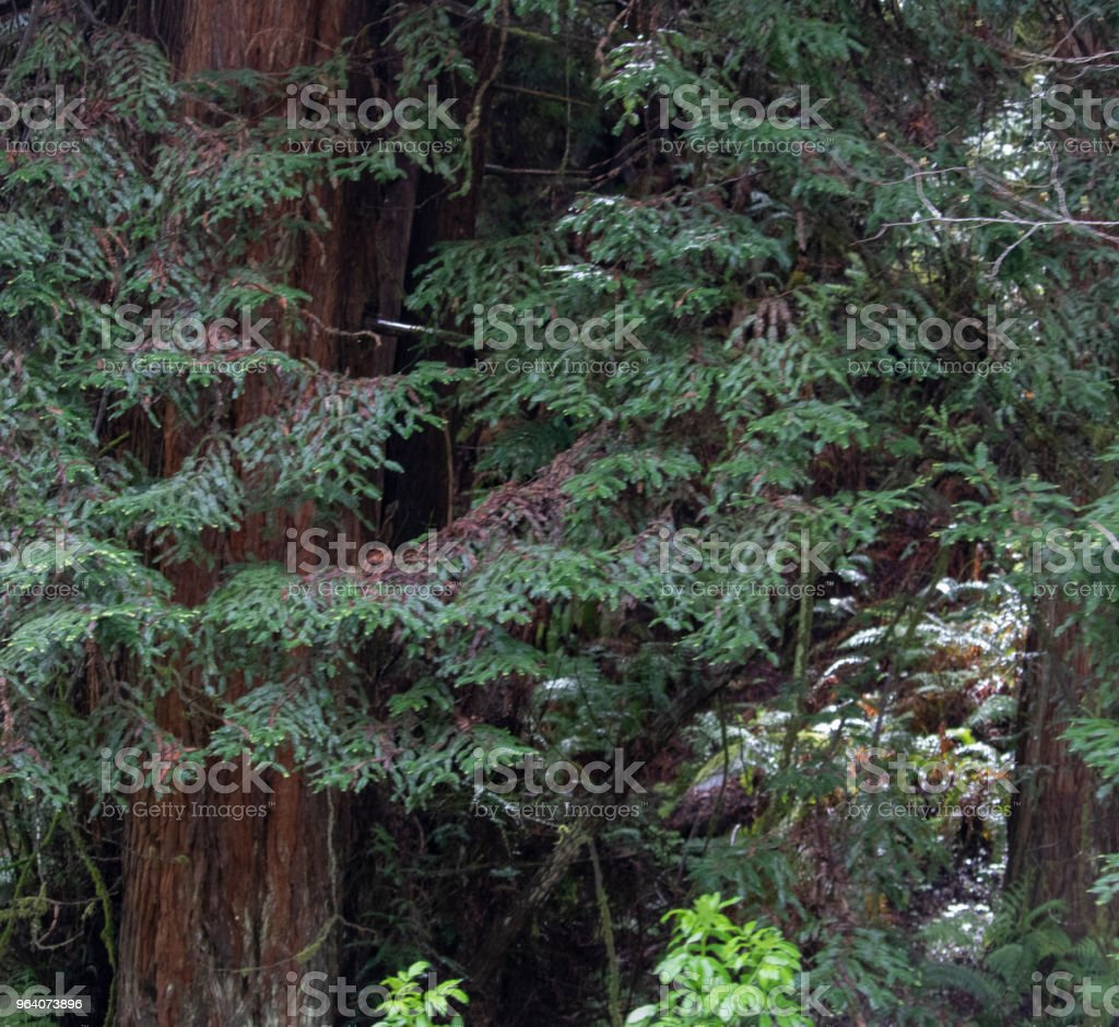In the Forest - Royalty-free 2015 Stock Photo