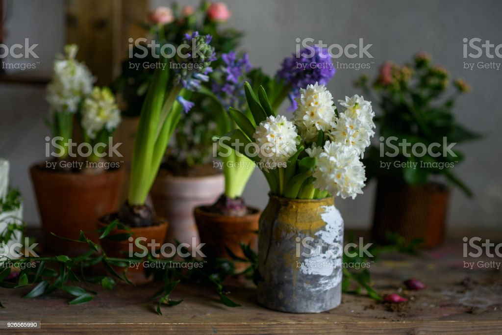 In the gardener's workshop. Decorative flowers in pots. Botanic style wedding accessories. Hyacinths and roses. Moody atmosphere.