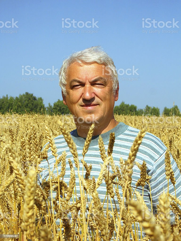 In the Golden Sea of Wheat I royalty-free stock photo