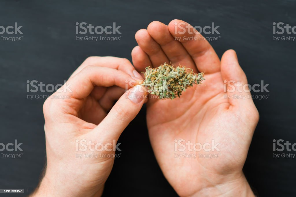 in the hands buds hemp close-up.the legalization of marijuana in - Royalty-free Addiction Stock Photo