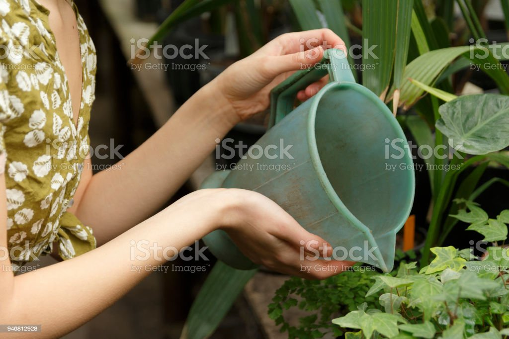 in the hands of a girl with a watering can, she watered the flow stock photo