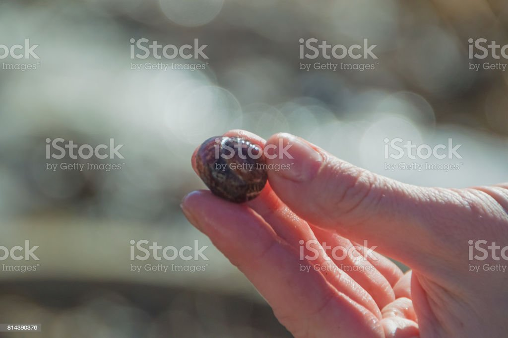 in the hands of a snail shell stock photo