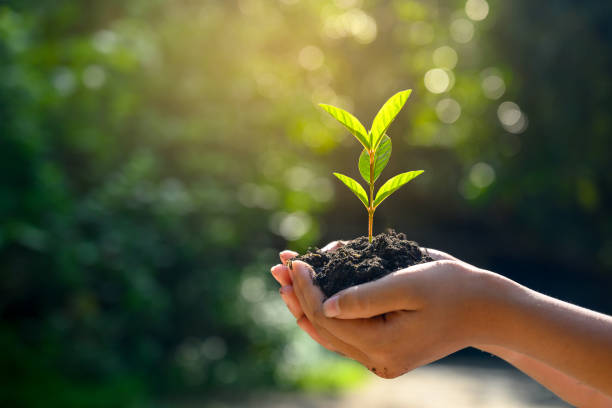 in the hands of trees growing seedlings. bokeh green background female hand holding tree on nature field grass forest conservation concept - sustainable living stock pictures, royalty-free photos & images