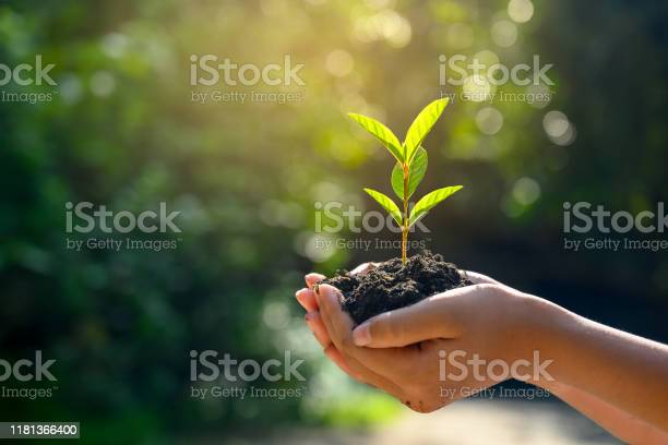 Photo of In the hands of trees growing seedlings. Bokeh green Background Female hand holding tree on nature field grass Forest conservation concept