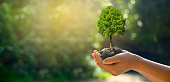 istock In the hands of trees growing seedlings. Bokeh green Background Female hand holding tree on nature field grass Forest conservation concept 1202427764