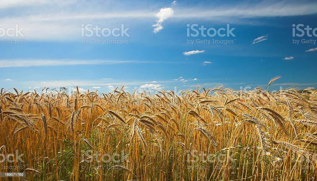 In the heartland... stock photo