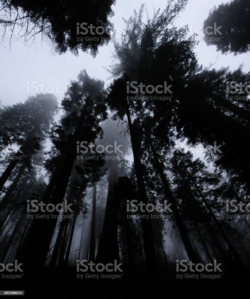 In the Land of the Giants stock photo