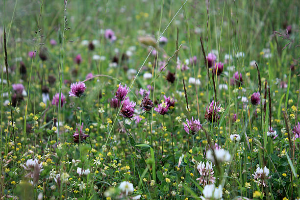 in the meadow stoneyfor in derbyshire abjure stock pictures, royalty-free photos & images