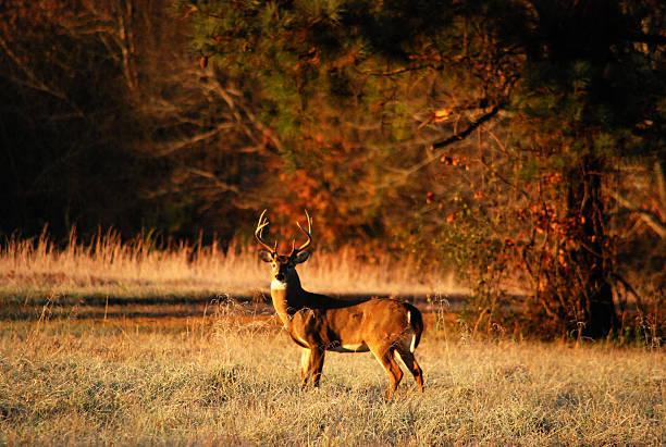 Dans la Prairie - Photo