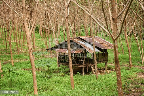 Shot of a vacant hut in a forest