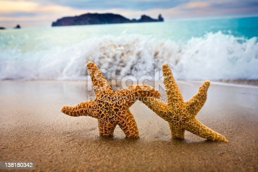 Couple of Starfish walking on the beach at dawn before humans occupy every single space.