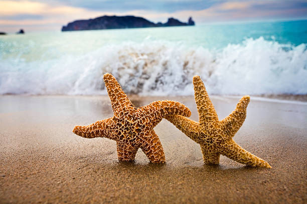 In the mood for love couple of starfish picture id138180342?b=1&k=6&m=138180342&s=612x612&w=0&h=326g8dmno 3zyjlnkdkz4p6dforiban ncfhq j5jug=