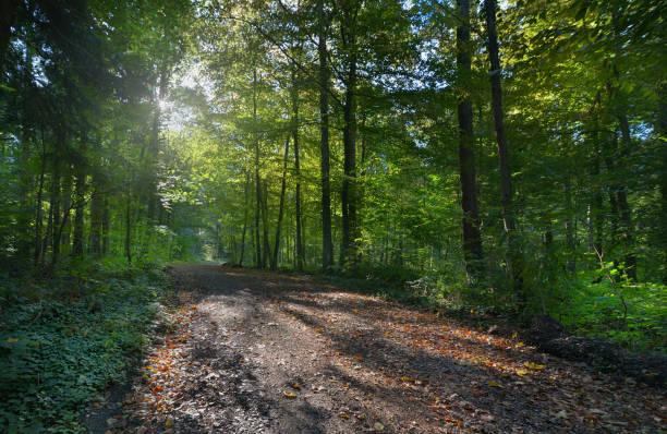 morgens im Wald – Foto