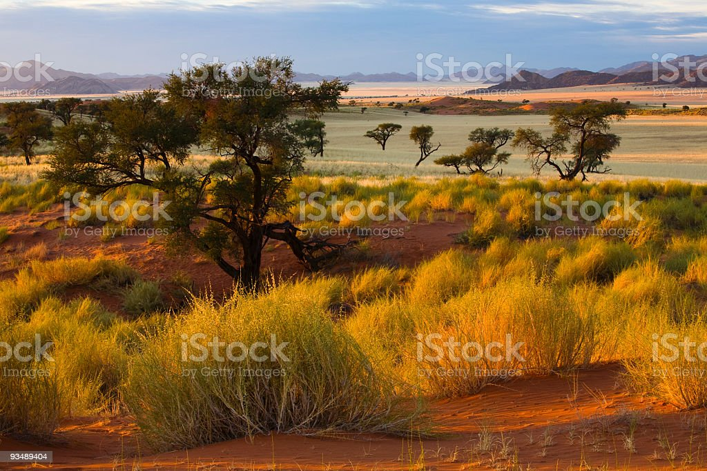 Morgens in der Wueste royalty-free stock photo