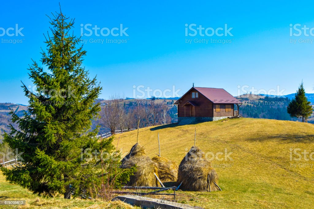 In the nature royalty-free stock photo