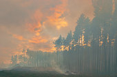 istock In the pine forest trees are burning 1011953994