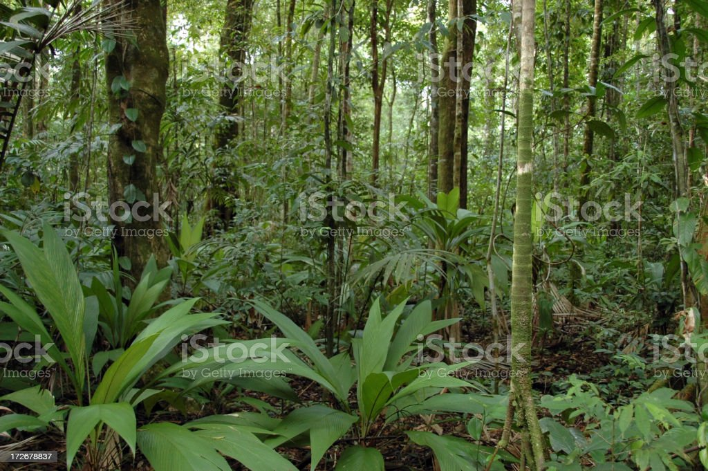 In The Rainforest royalty-free stock photo