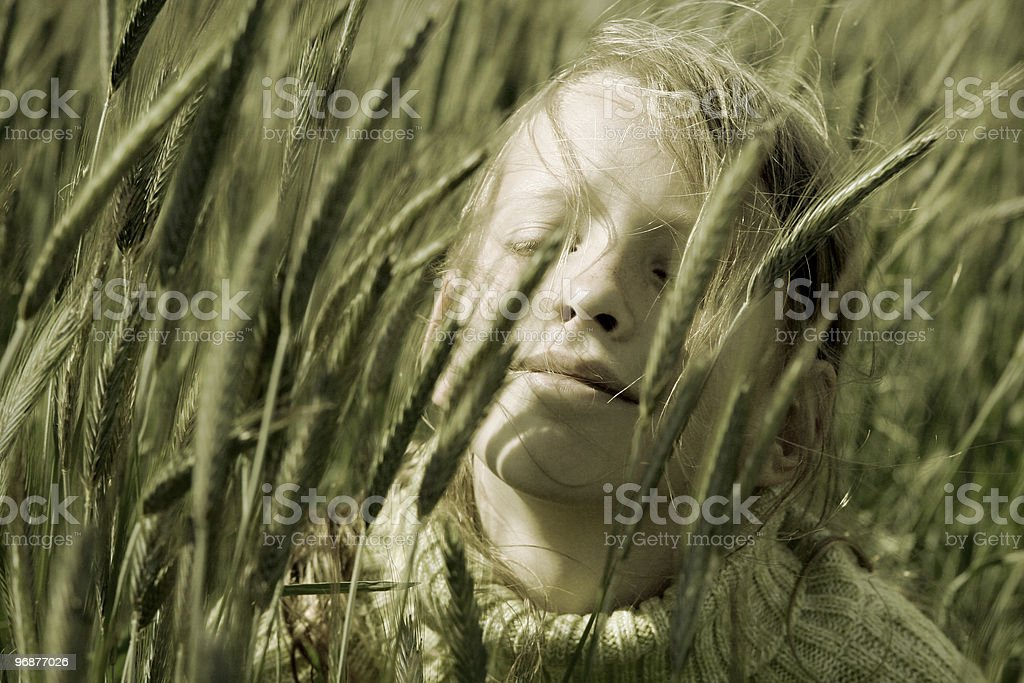 In the rye royalty-free stock photo