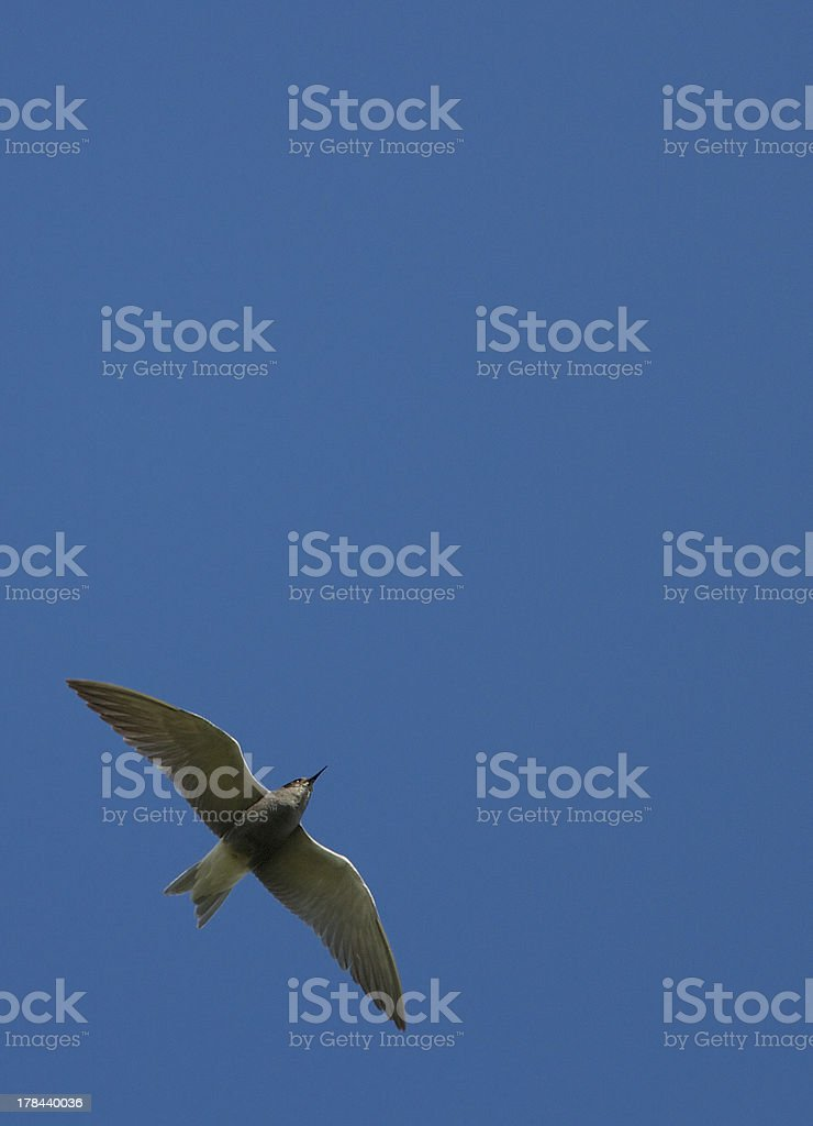 In the sky stock photo