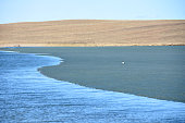 In the spring, ice melts on the lake in the steppe and a seagull walks along the ice