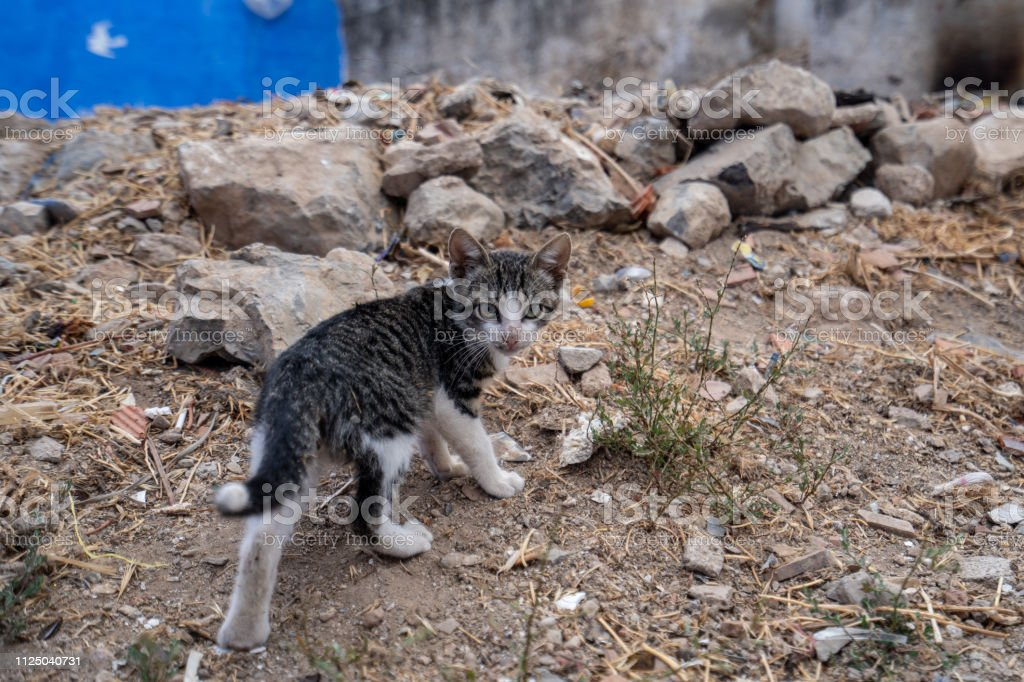 In the suburbs of Chefchaouen, a small cat is running away from the camera, Morocco stock photo