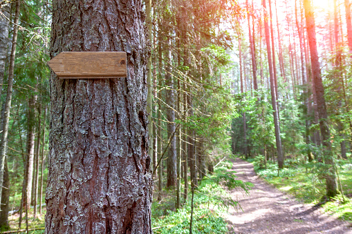 In the summer forest at the crossroads of forest roads weighs a wooden plate showing the direction of movement.